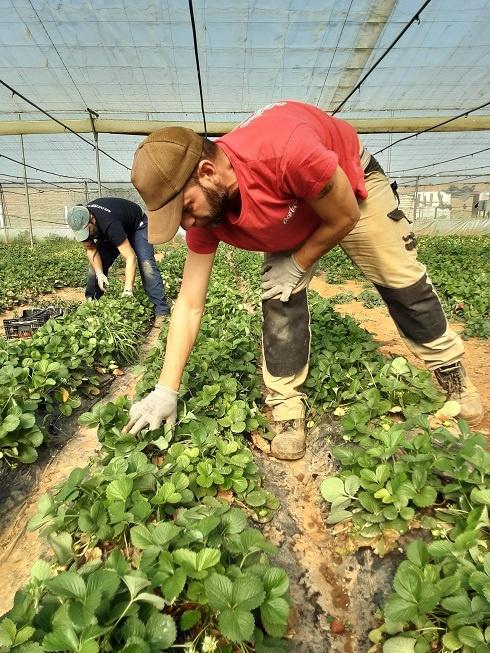 Verduras Ecológicas en Sevilla